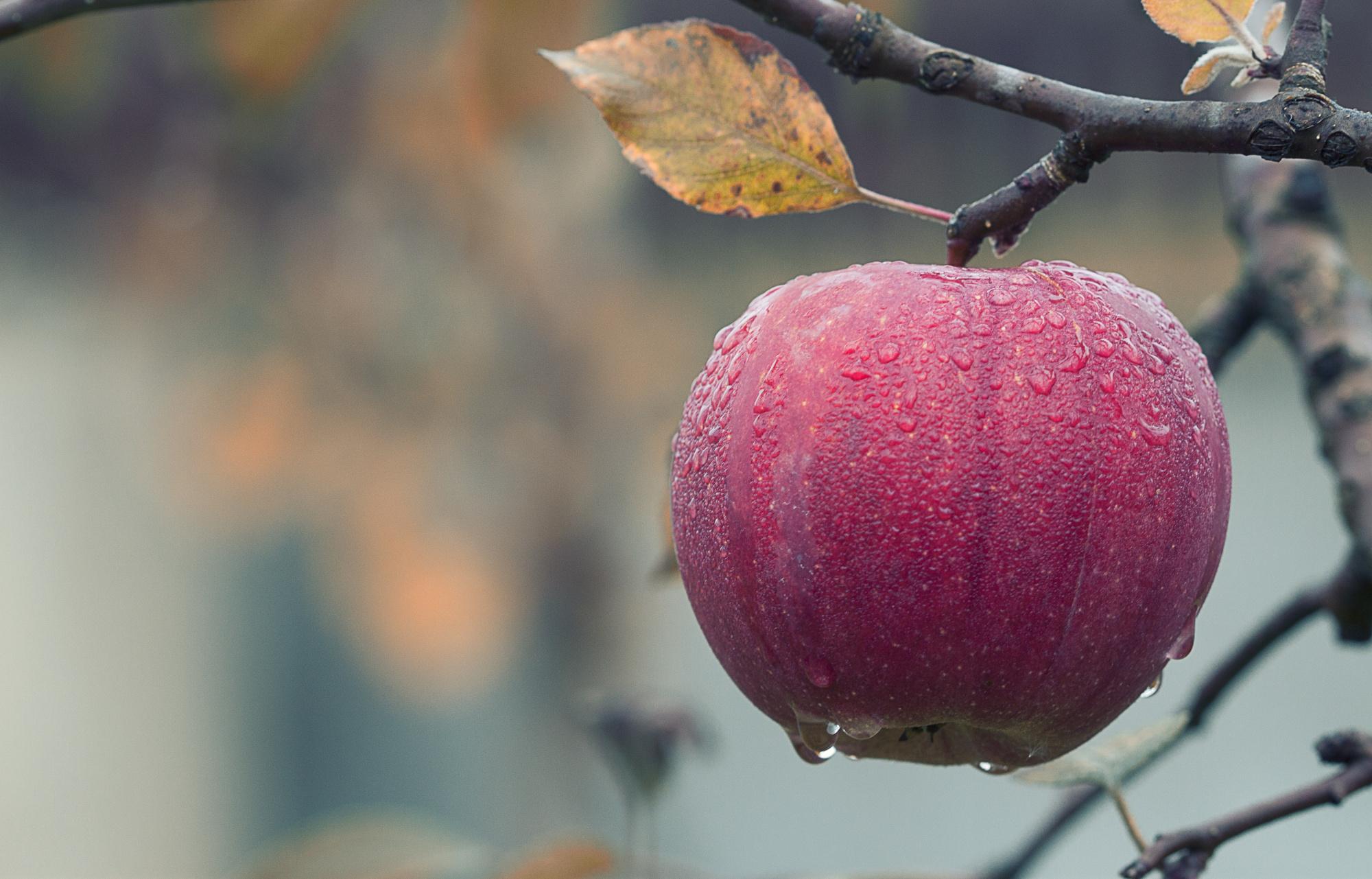 Zasada owoców zatrutego drzewa – dowody wpostępowaniu kontrolnym cz.I